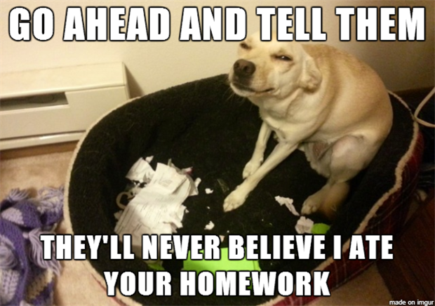 dog ate your homework