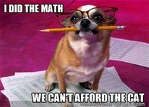 dog did the math