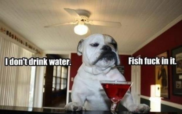dog doesn't drink water