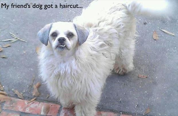 dog hair cuts