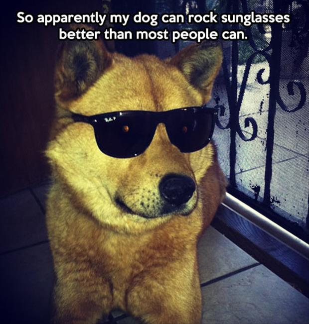 dog looks good in sunglasses