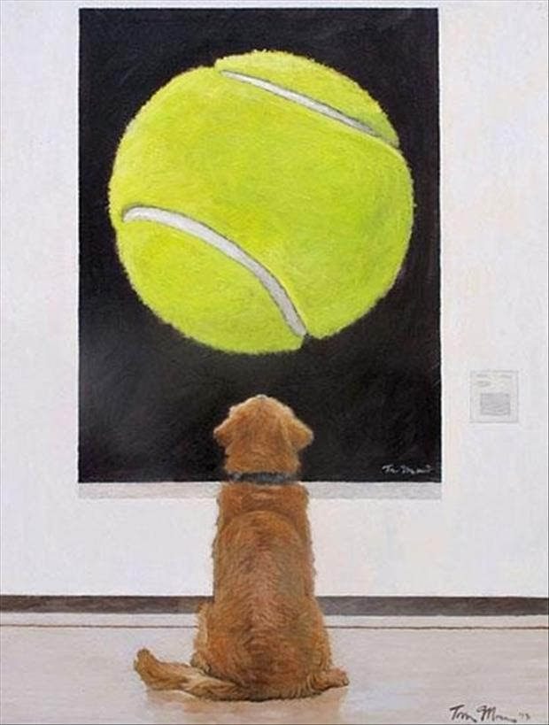 dog loves tennis balls