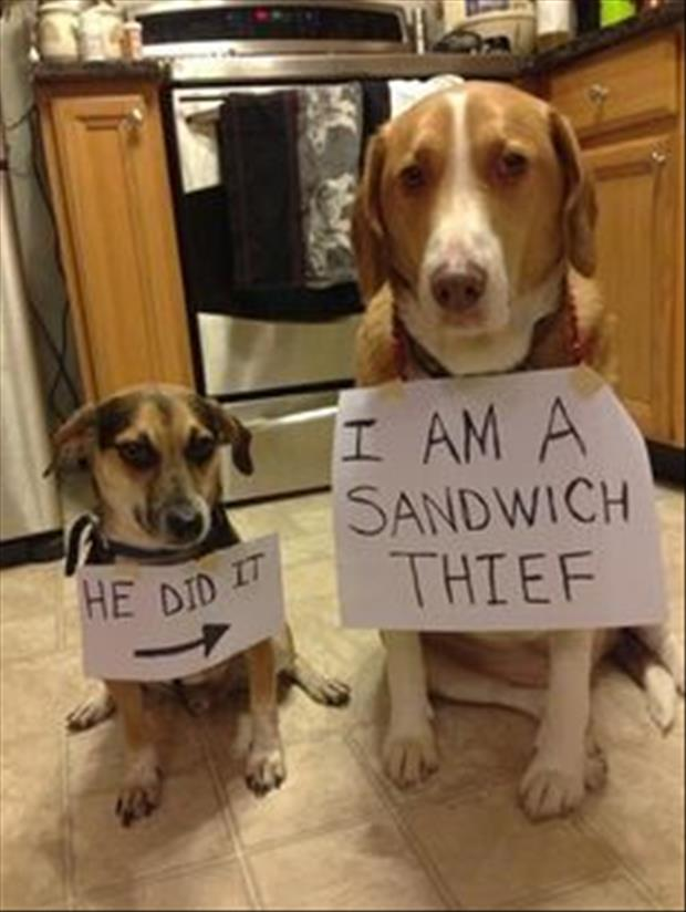 dog shaming meme sandwhich thief