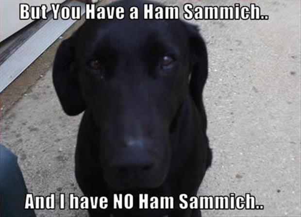 dog wants your sandwich