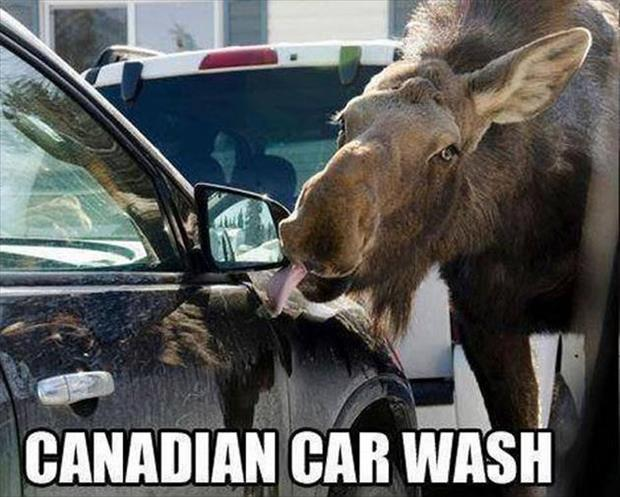 funny canadian car wash