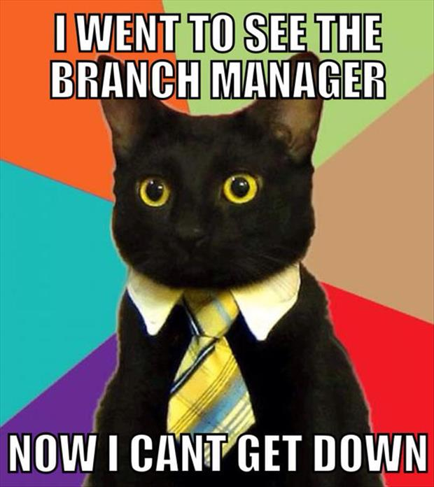 funny cat manager