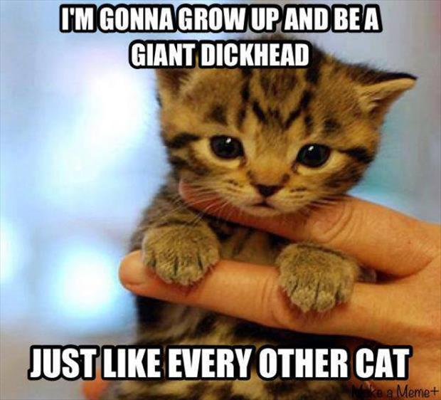 funny cats are dickheads