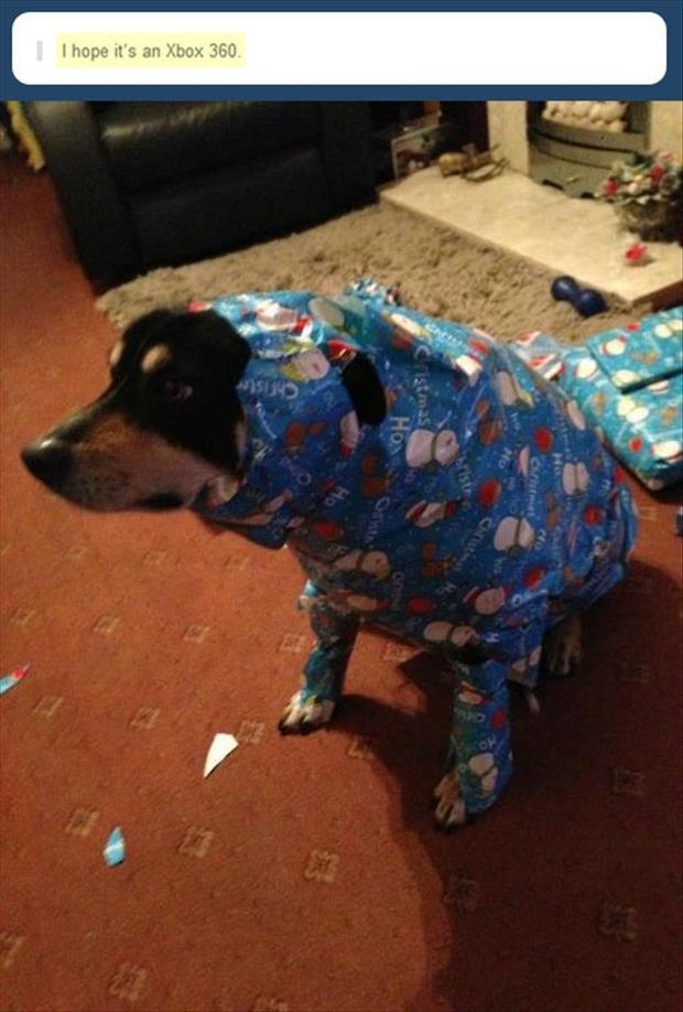 funny christmas presents dump a day
