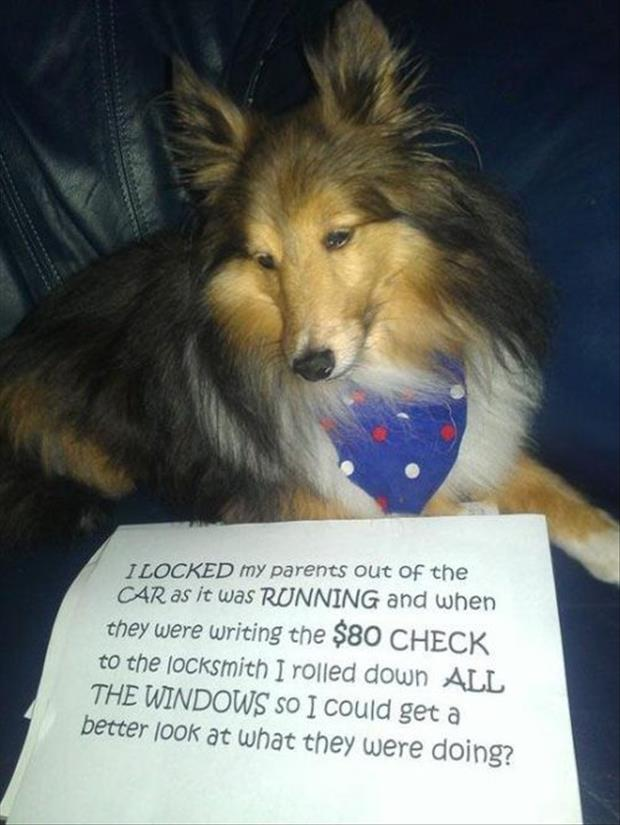 funny dog shaming locked in a car