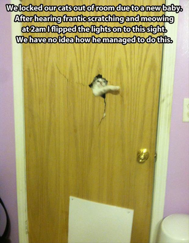 funny pictures (9)