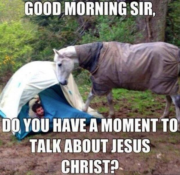 horse good morning