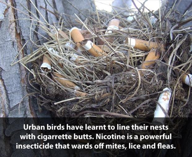 how to build a bird's nest
