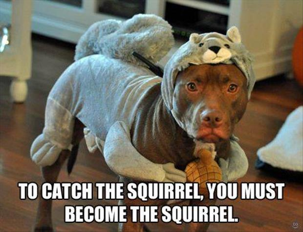 how to catch a squirrel