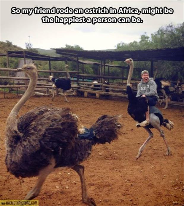 how to ride an ostrich