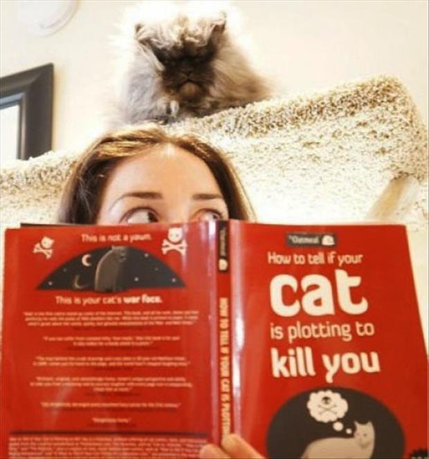 is your cat plotting to kill you
