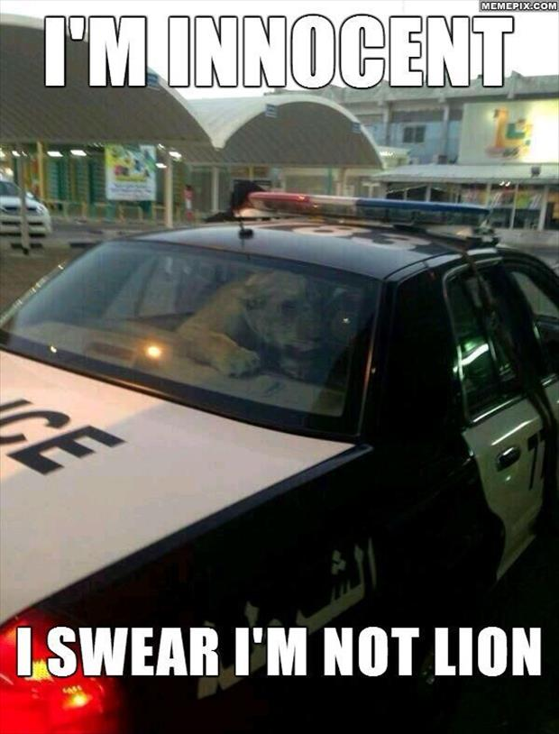 lion in a police car