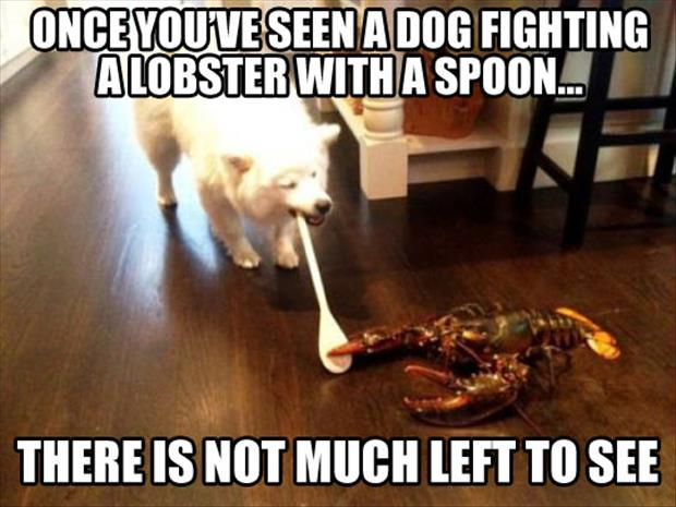 lobster fighting
