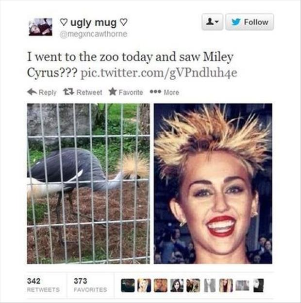 miley cyrus at the zoo