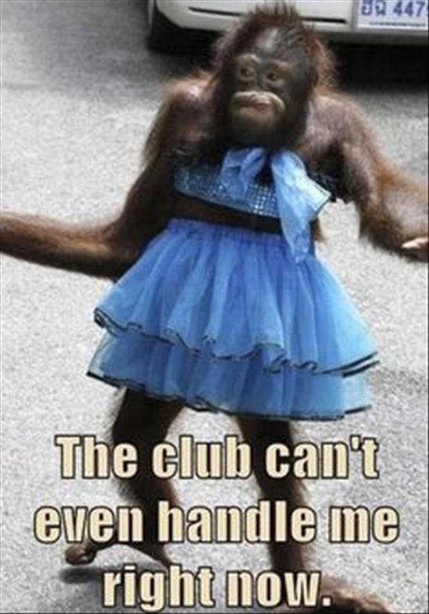 monkey at the club