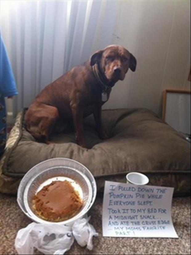 pumpkin pie dog shaming