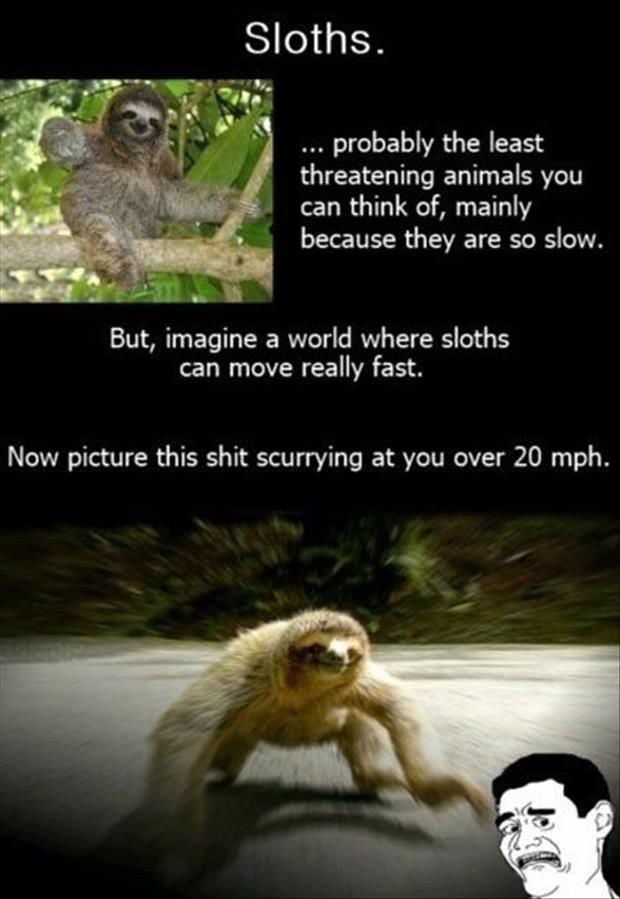 sloths are scary