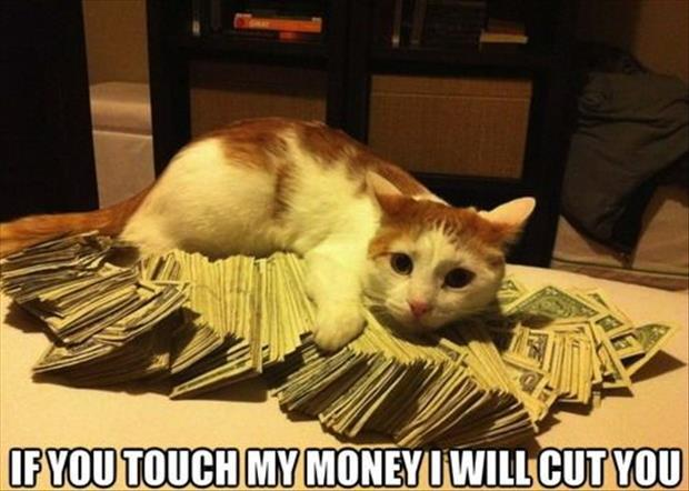 the cat doesn't want you to touch his money