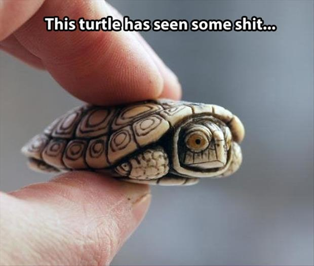 this turtle has seen some things