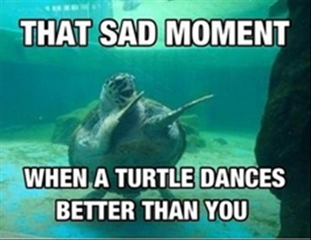 turtle dances better than you