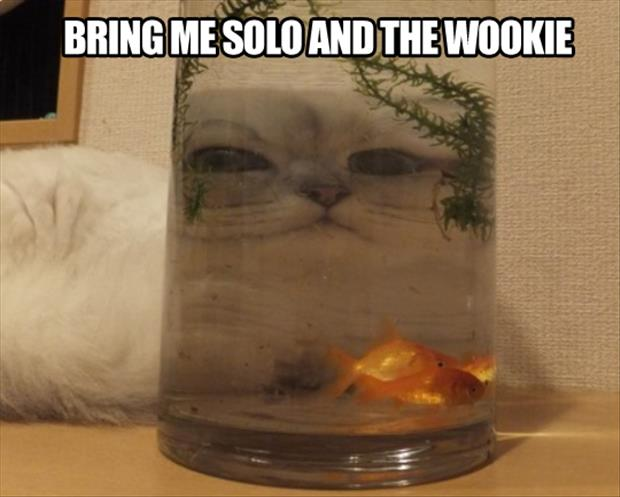 a bring me solo and the wookie