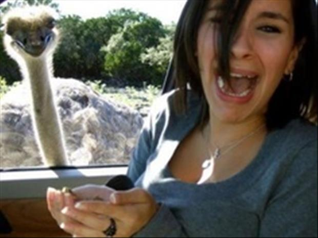 Funny Animal Photobombs Pics - 35 hilarious animal photobombs ever