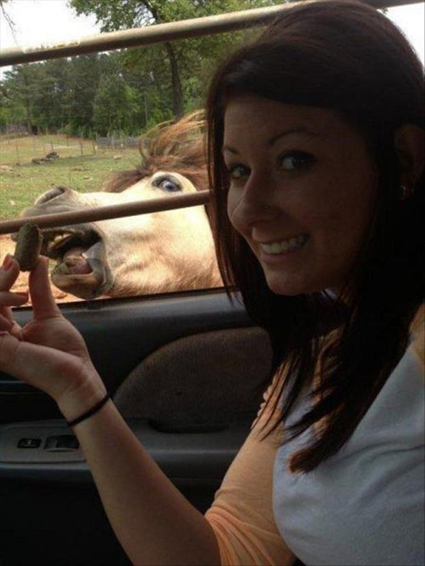 animal photobombs (21)