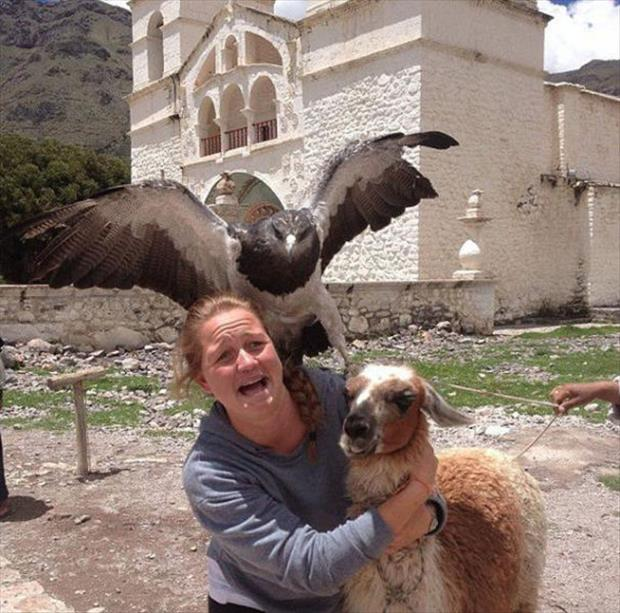 animal photobombs (25)