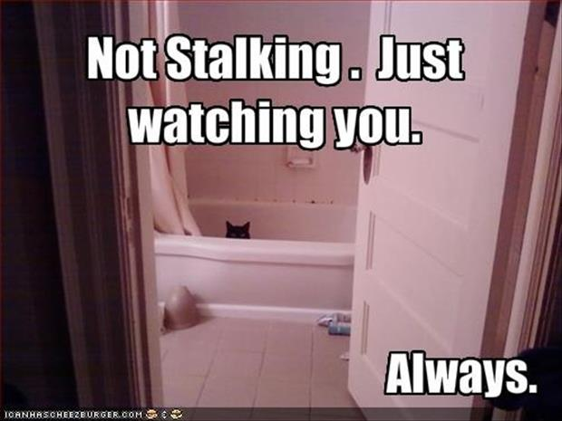 cat is watching you