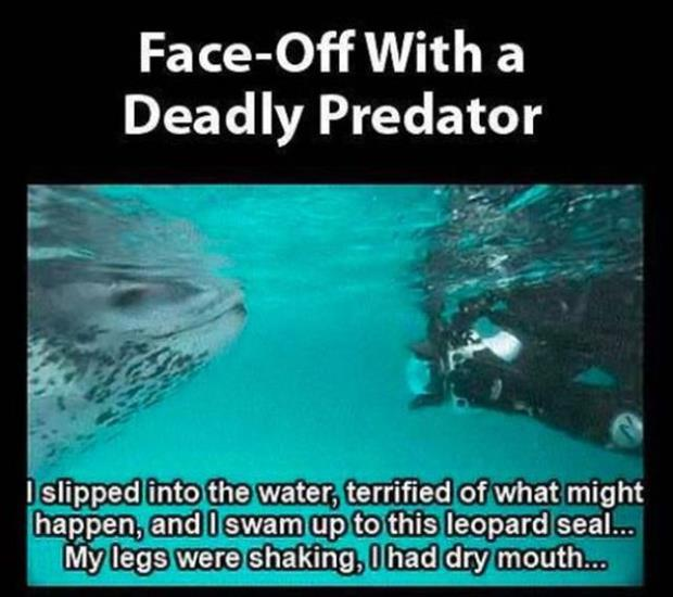 close encounter with a leopard seal (1)