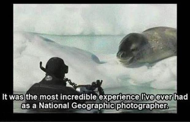 close encounter with a leopard seal (10)