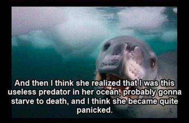 close encounter with a leopard seal (6)