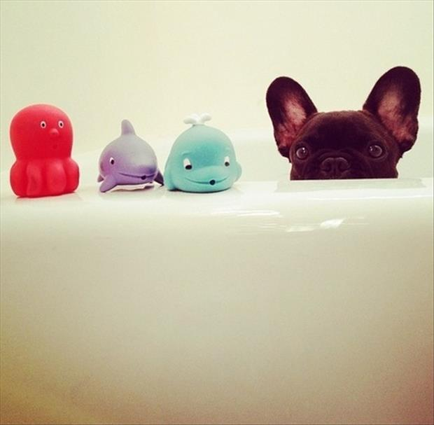 cute puppy and bath toys