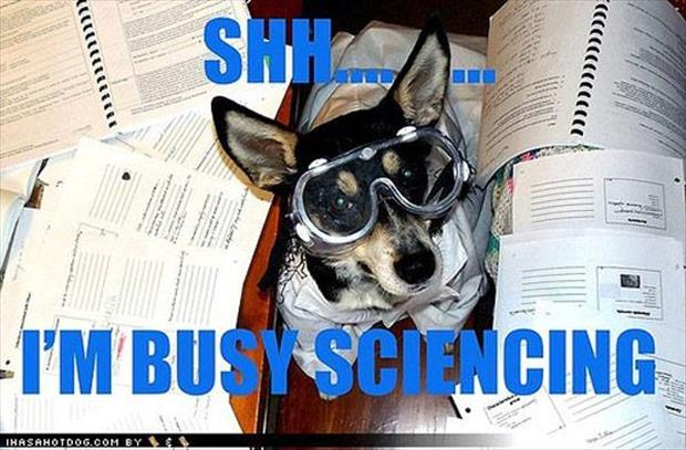 dog doing science