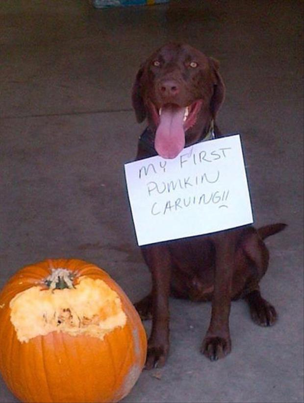 dog first pumpkin carving