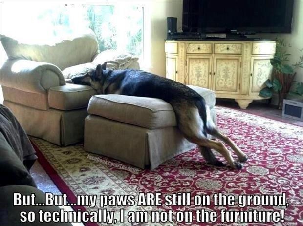 dog on the furniture