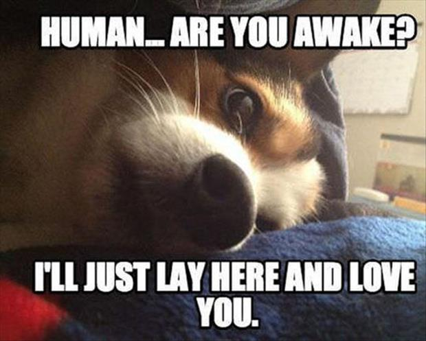dog wakes you up