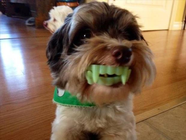 dog with scary teeth