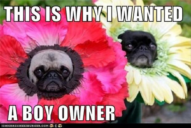 dogs are flowers