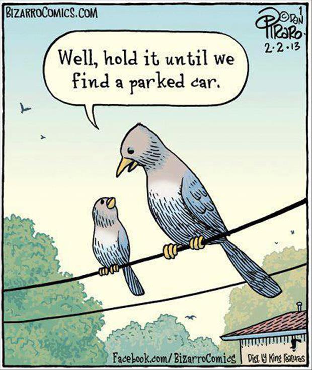 funny bird cartoons