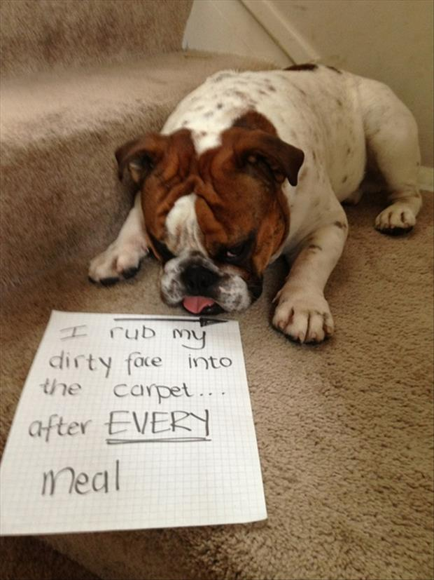funny dog shaming dirty dogs