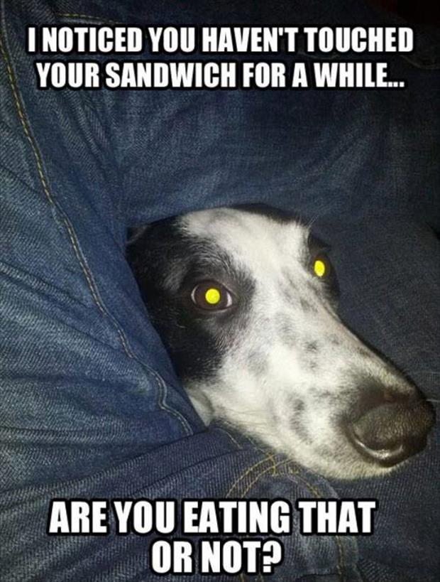funny dog wants your sandwhich