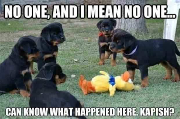 funny dogs and duck
