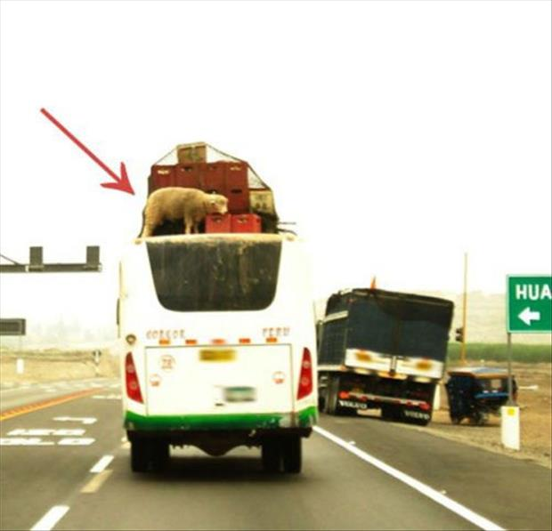 funny packing vehicle jobs (13)