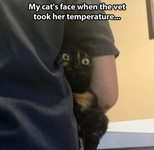 funny pictures (49)