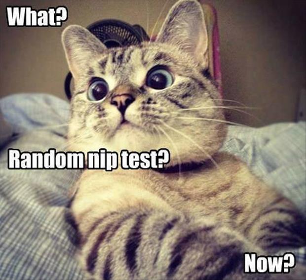 funny pictures (51)